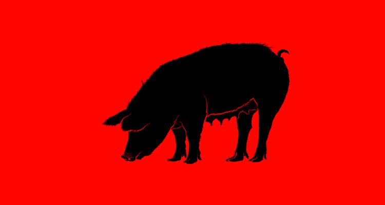 makanan babi
