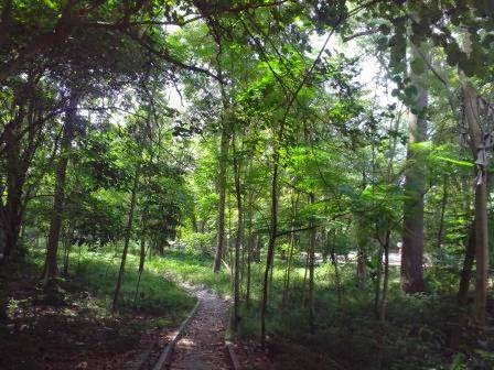 Sumber foto: http://little1academybdniyogyakarta.blogspot.com